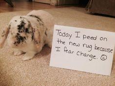 Bunny Shaming. I fear change. I fear everything.