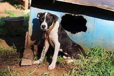 The ASPCA and The Humane Society worked with the FBI to make arrests and if convicted, the suspects could face up to five years in prison. | 367 Dogs Were Rescued In The Second Largest Dogfighting Raid In U.S. History