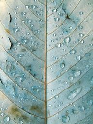 leaf with due drops