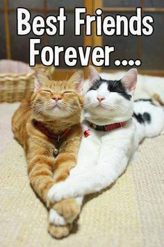 BFF <3 @holly_922 look! The orange cat is you and the other cat is me lol -_-