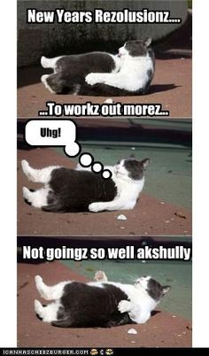caption,captioned,Cats,exercise,FAIL,fat,happy new year,holidays,new year,new years,sit ups,working out,workout