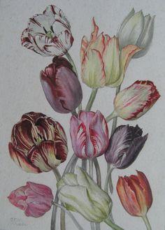 Tulip fever.