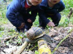 30429273_1700138226745972_256205887_n Turtle, Animals, Activities For Babies, Turtles, Animales, Animaux, Tortoise, Animal, Animais