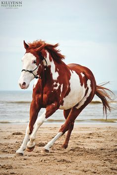 paint horses with blue eyes -