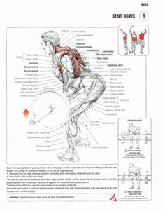 exercises and working different body parts