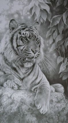 Black and White Tiger Art  head on back, over shoulder into chest