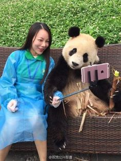 CHINA 🇨🇳 Clever giant panda knows how to pose for selfies with tourist in China Panda Love, Cute Panda, Animals And Pets, Funny Animals, Cute Animals, Panda Mignon, Panda Lindo, Selfie Poses, Selfie Stick