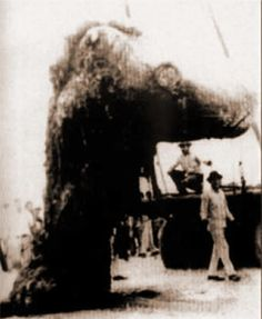 Tecoluta Carcass - found dead on a beach in Tecoluta, Mexico in 1969. Its 35 ton body was covered in hard, jointed armor. It had a 10 foot tusk protruding from its head.