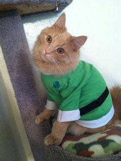 Cat pictures, kitten pictures, cute pictures of cats and kittens dressed up in green for St. Patrick's Day.