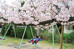 加古川・藤井質店ブログ<質屋・リサイクル日記> 桜が満開!!!日岡山公園&ながはえ公園。 http://pawnfujii.floppy.jp/staff/2015/04/post-1512.html