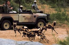Safari in South Africa - I think this would honestly be the trip of a lifetime Game Reserve South Africa, South Africa Safari, African Wild Dog, African Safari, South Africa Tourist Attractions, Oh The Places You'll Go, Places To Travel, Wild Dogs, Cool Countries