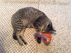 Fell asleep playing with toy