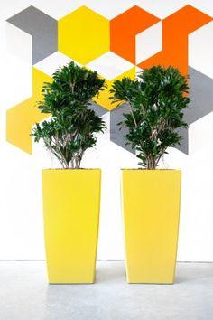 Impressies | KOEN Interieurbeplanting