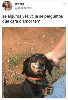Amor de cão pelo dono é tudo