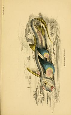 v. 37: Ichthyology v. 3 (British Fishes, Part 2) - Ichthyology / - Biodiversity Heritage Library