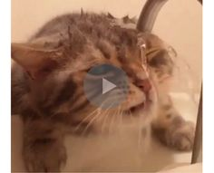 I'm not quite sure, but there has to be a better method for this cat drinking from a sink. Then again, this is way more entertaining for all of us to watch.