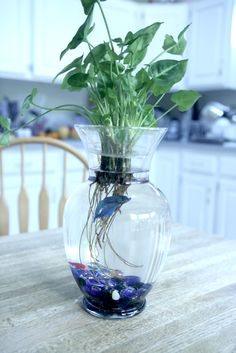 Post image for Day 8: 24 Days of Green Christmas Crafts – Fish Terrarium