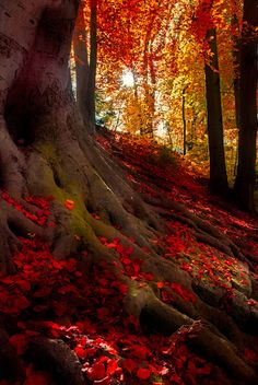 opticoverload: Autumn Light