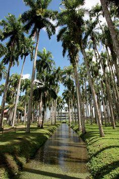 Palmentuin, Paramaribo, Suriname.