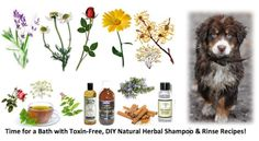 Ottawa Valley Dog Whisperer : DIY Recipes for Safe, Natural, Herbal Shampoos and Rinses for Dogs, Cats