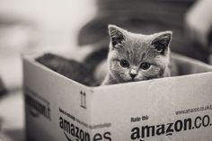 Amazon.com Fluff