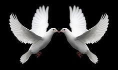 Doves signify 'Commitment & Love'