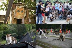 Houtong, Taiwan. Houtong é conhecido como a cidade para os amantes do gato. Centena de gatos percorrem as ruas, atraindo turistas, e há um punhado de lojas de souvenirs que vendem artigos de gato. Taiwan tem o primeiro café gato do mundo, que foi inaugurado em 1998.