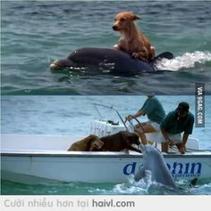 Got rescued by dolphin after 15 hours at sea. Best Funny Pictures, Cool Pictures, Funny Pics, Funny Animals, Cute Animals, Baby Dolphins, Dolphin Art, Cute Funny Dogs, Ocean Creatures
