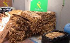 Golpe al contrabando en Toledo: la Guardia Civil interviene más de 6 toneladas de hojas de tabaco