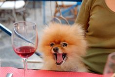 I get this excited about wine too.