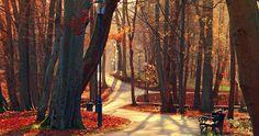 trees park alley 4k ultra hd wallpaper