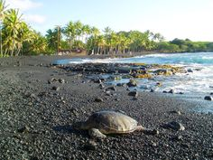 You may have to share the black volcanic sands of Punalu'u Beach with the sea turtles that come to bask in the sun (just don't touch; they're protected). You may also have some company of the human variety, since it is among the most popular and accessible colored beaches in Hawaii.