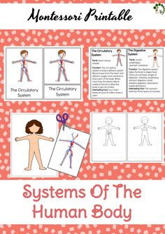 Systems Of The Human Body – Montessori Printable – Montessori Nature