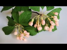 ABC TV | How To Make Enkianthus Campanulatus Paper Flower From Crepe Pap...