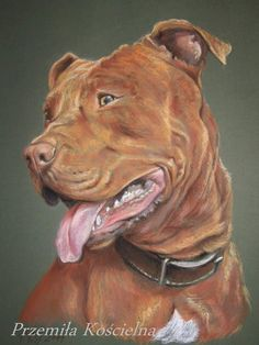 Custom Pet Portrait pastel drawing Painting from by CanisArtStudio