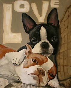 The Boston Terrier breed originated in Boston and is one of the few breeds that are native to the U. In the an inter-mixing of English Bulldogs Boston Terrier Pug, Pitbull Terrier, Brown Boston Terrier, Terrier Dogs, Continental Bulldog, Dog Paintings, Dog Portraits, Art Plastique, Dog Art