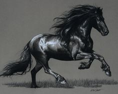 Graphite drawing of Friesian