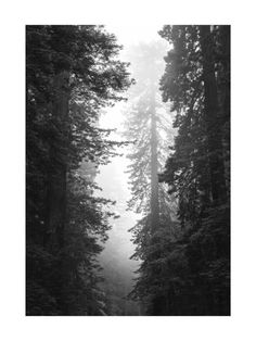 Redwood Morning Wall Art Prints by Kamala Nahas | Minted