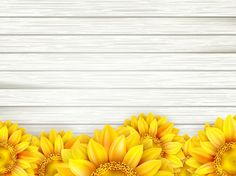 Beautiful Sunflowers With Wooden Background Vector 06