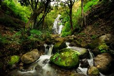 Peaceful Forest Waterfall -              Wall Mural & Photo Wallpaper -            Bathroom