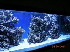 looking for ideas to aqua scape a 125 mixt - Reef Central Online Community Archives Aquarium Aquascape, Reef Aquascaping, Aqua Aquarium, Saltwater Aquarium Fish, Aquarium Setup, Aquarium Design, Saltwater Tank, Marine Aquarium, Aquarium Landscape