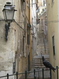 Wąska uliczka w Afamie Villas, World, Villa, Mansions