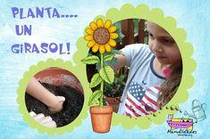 ¿Cómo plantar un girasol? Una actividad muy gratificante de jardinería para niños: http://www.manualidadesinfantiles.org/plantar-un-girasol