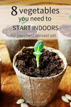 Container Gardening For Beginners Get a head start on your garden this season. Here are 8 vegetables you need to start indoors, how to start them and transplant them for your best harvest ever. Indoor Vegetable Gardening, Home Vegetable Garden, Organic Gardening Tips, Flower Gardening, Herb Gardening, Gardening Blogs, Garden Plants, Kitchen Gardening, Hydroponic Gardening