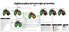 List of coffee varieties - Wikipedia, the free encyclopedia