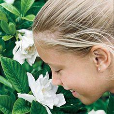 Grumpy Gardener's Guide to Gardenias