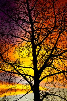 Colorful sunset silhouette (by Bo Insogna)