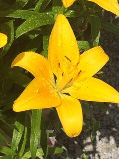 Mi flor favorita de mi jardin