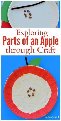 Crafting and science combine in a hands on learning opportunity as kids explore the parts of an apple in this fun an engaging art project! Perfect for an apple unit extension activity! #prek #kindergarten #applescience #fall #artsandcrafts Preschool Apple Activities, Preschool Apple Theme, Preschool Projects, Autumn Activities, Preschool Art, Preschool Apples, Apple Crafts For Preschoolers, Fall Preschool Science, Kindergarten Apples