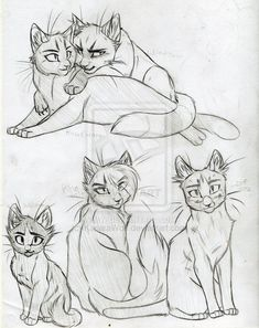 how do you draw a warrior cat   Warrior Cats Set 18 by *KasaraWolf on deviantART